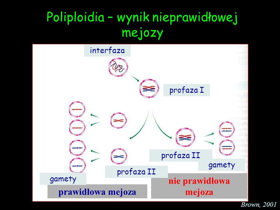 Poliploidia – wynik nieprawidłowej mejozy