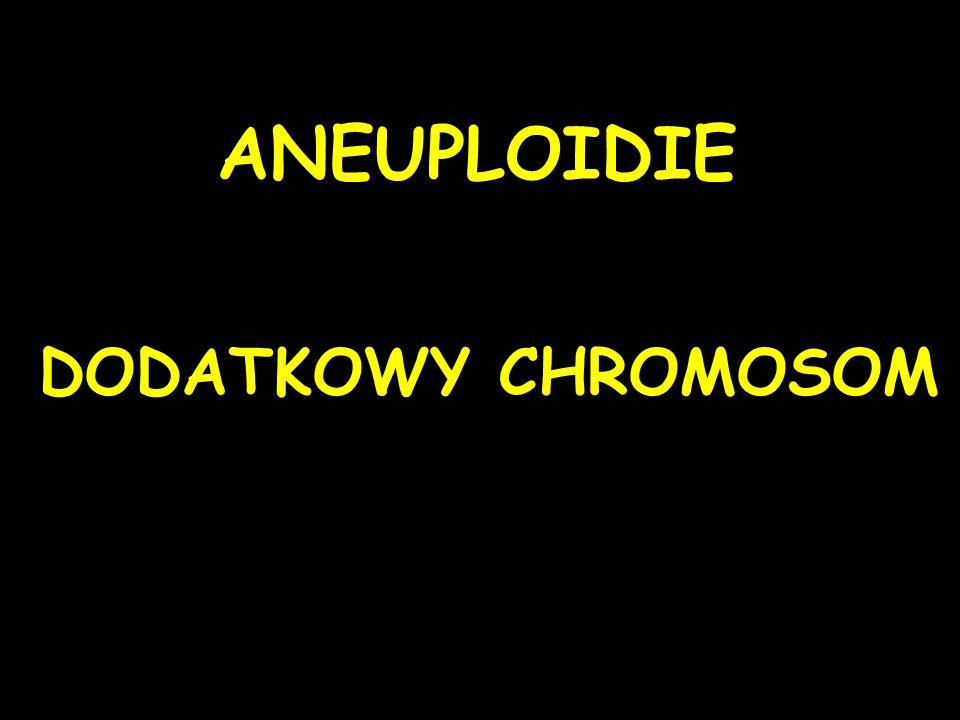 ANEUPLOIDIE DODATKOWY CHROMOSOM