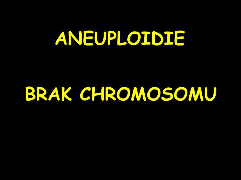 ANEUPLOIDIE BRAK CHROMOSOMU