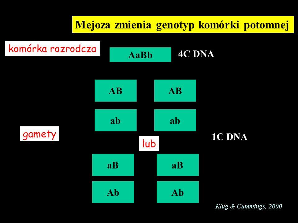 Mejoza zmienia genotyp komórki potomnej