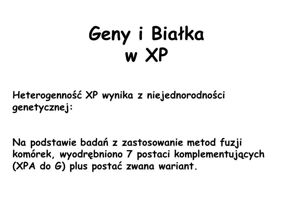 Geny i Białkaw XP. Heterogenność XP wynika z niejednorodności genetycznej: