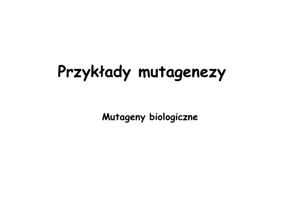 Przykłady mutagenezy Mutageny biologiczne
