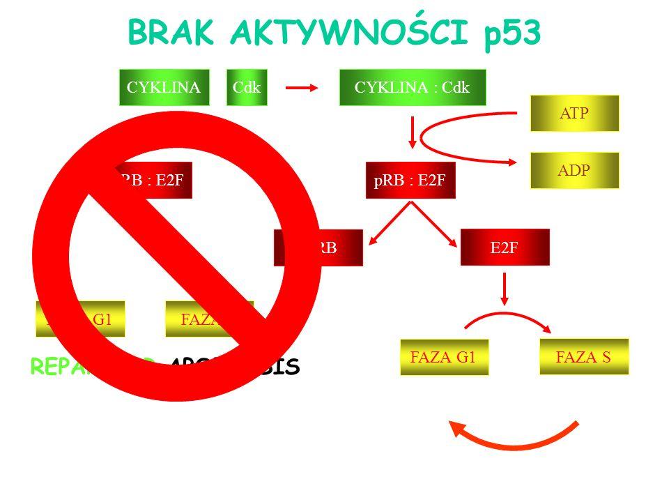 BRAK AKTYWNOŚCI p53 REPARE OR APOPTOSIS CYKLINA : Cdk pRB : E2F ppRB