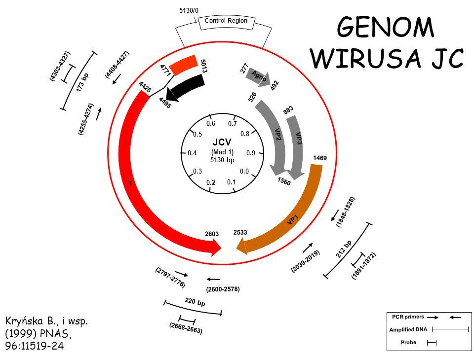 GENOM WIRUSA JC Kryńska B., i wsp. (1999) PNAS, 96:11519-24 JCV 0.6