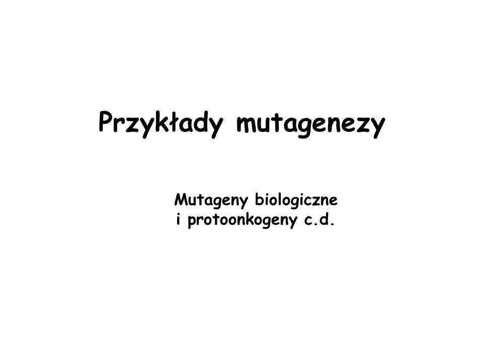 Przykłady mutagenezy Mutageny biologiczne i protoonkogeny c.d.