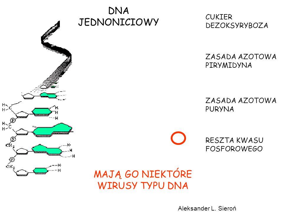 DNA JEDNONICIOWY MAJĄ GO NIEKTÓRE WIRUSY TYPU DNA CUKIER DEZOKSYRYBOZA