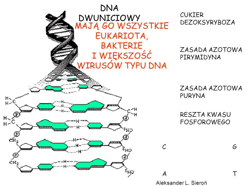 DNA DWUNICIOWY MAJĄ GO WSZYSTKIE EUKARIOTA, BAKTERIE I WIĘKSZOŚĆ