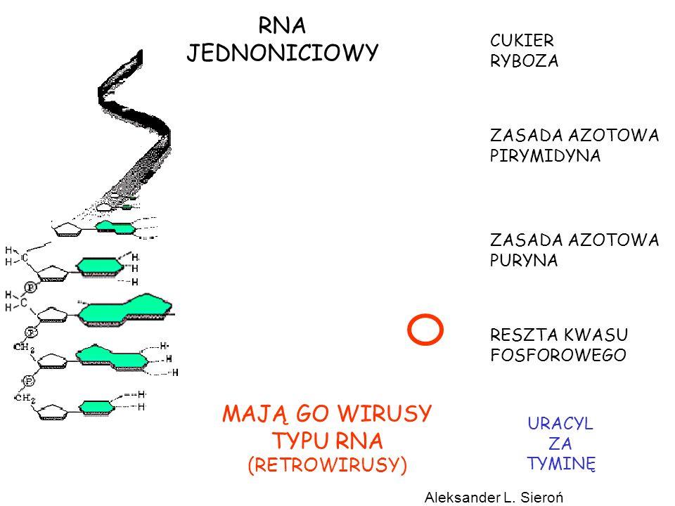 RNA JEDNONICIOWY MAJĄ GO WIRUSY TYPU RNA (RETROWIRUSY) CUKIER RYBOZA