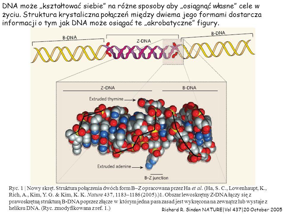 """DNA może """"kształtować siebie na różne sposoby aby """"osiągnąć własne cele w życiu. Struktura krystaliczna połączeń między dwiema jego formami dostarcza informacji o tym jak DNA może osiągać te """"akrobatyczne figury."""