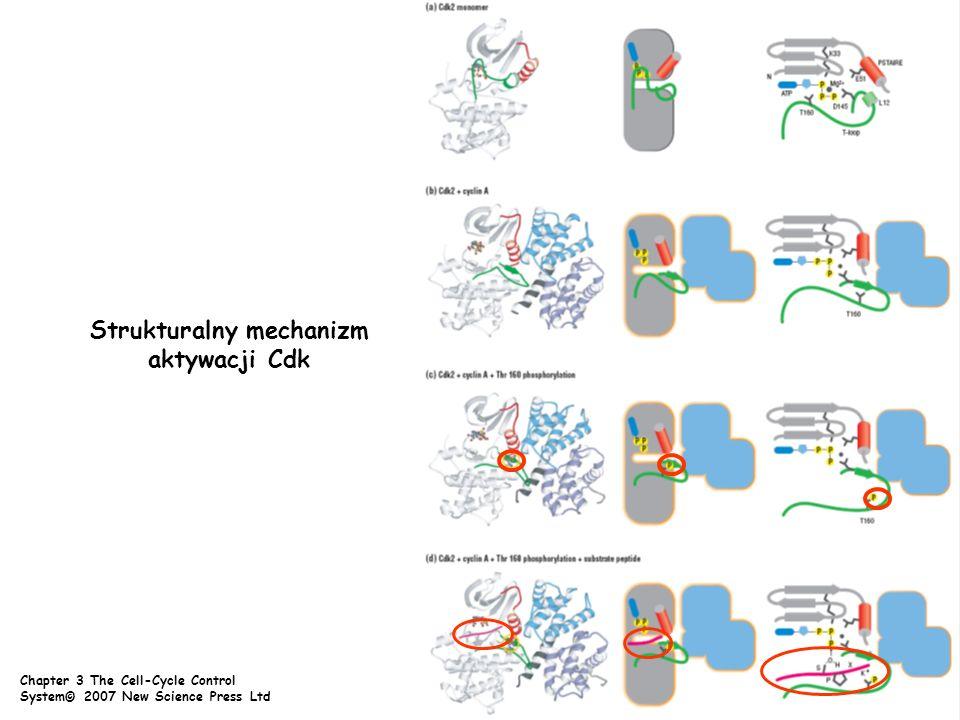Strukturalny mechanizm