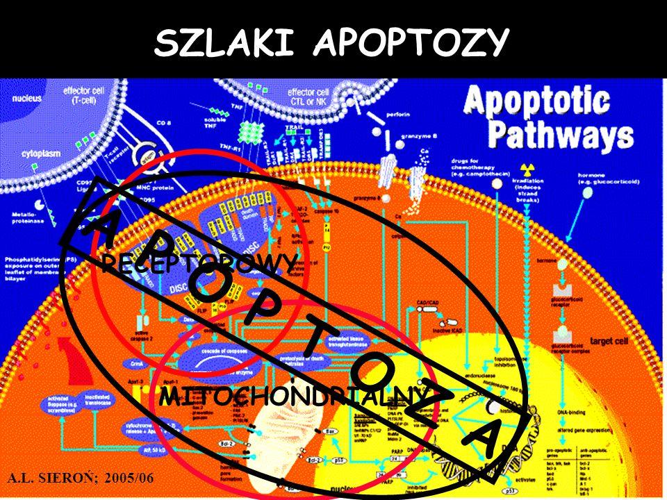A P O P T O Z A SZLAKI APOPTOZY RECEPTOROWY MITOCHONDRIALNY
