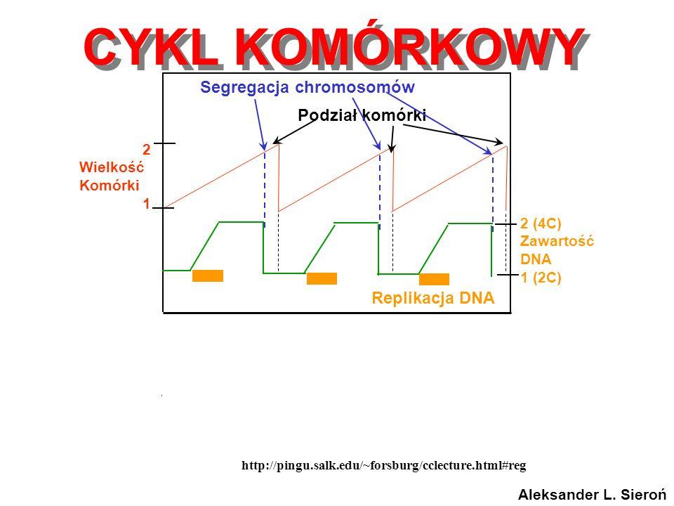Segregacja chromosomów