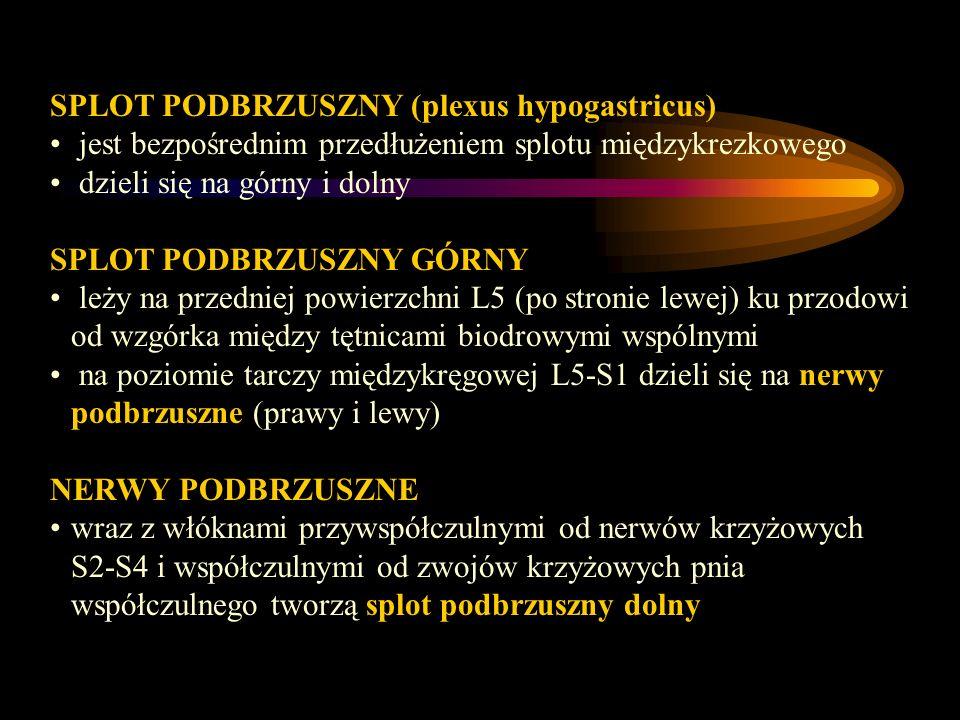 SPLOT PODBRZUSZNY (plexus hypogastricus)