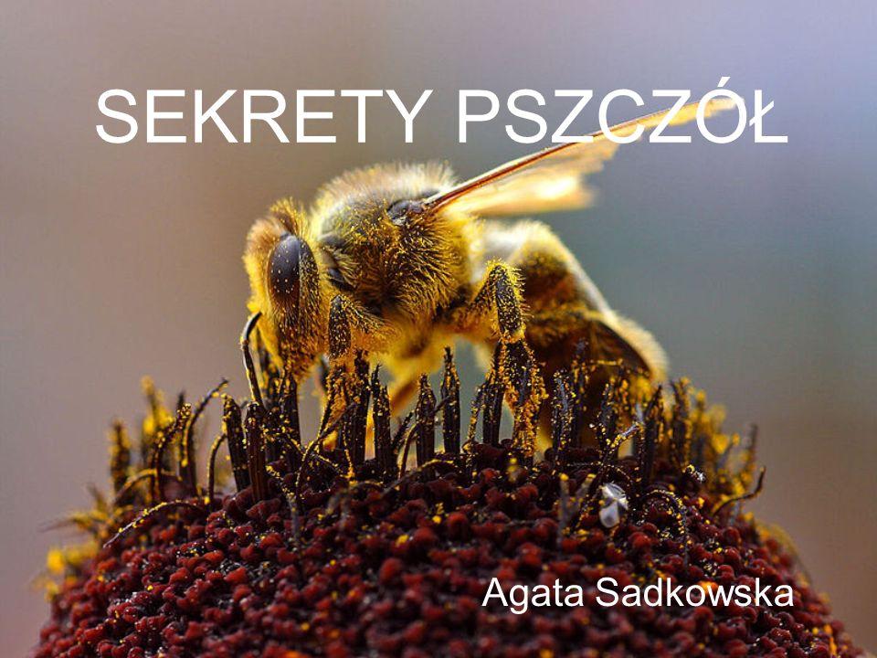 SEKRETY PSZCZÓŁ Agata Sadkowska