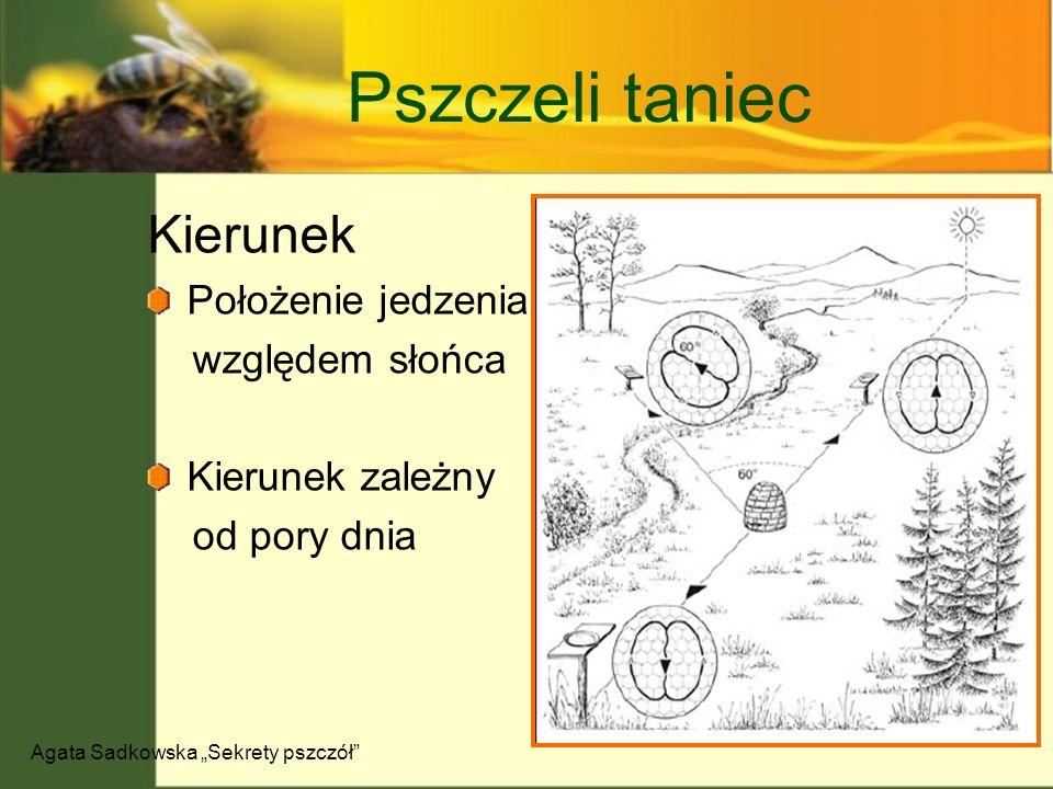 """Agata Sadkowska """"Sekrety pszczół"""
