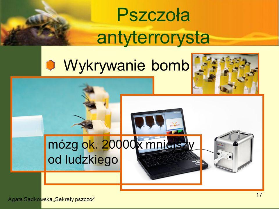 Pszczoła antyterrorysta