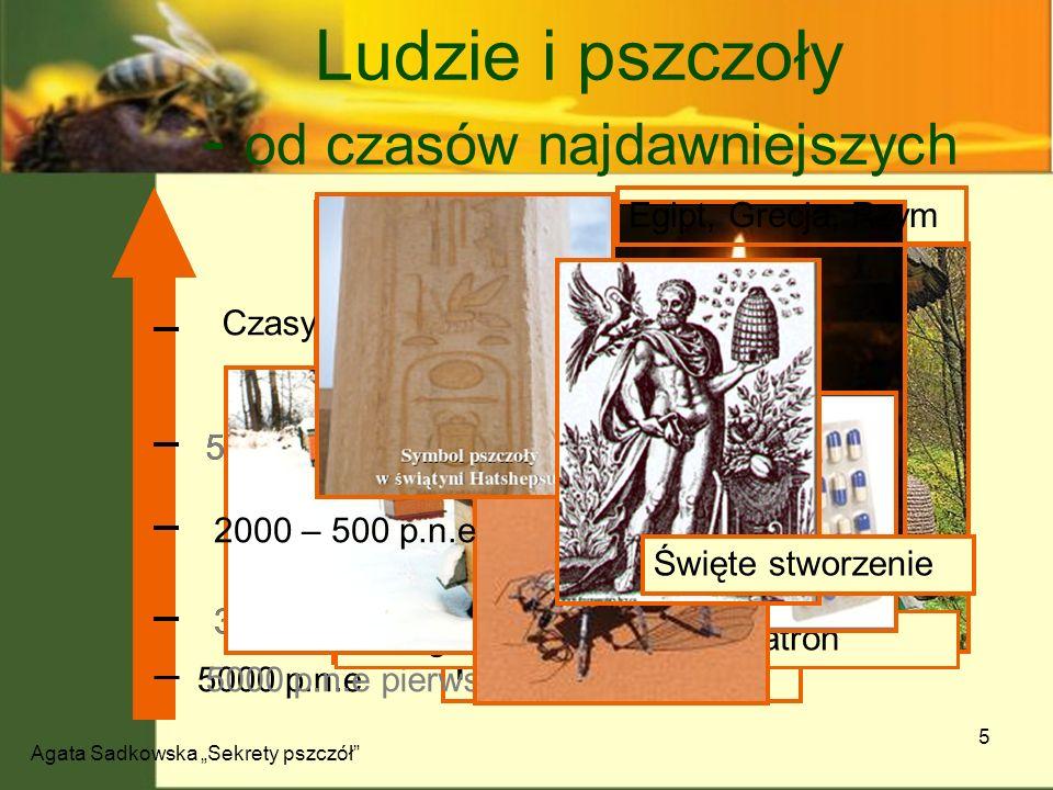 Ludzie i pszczoły - od czasów najdawniejszych