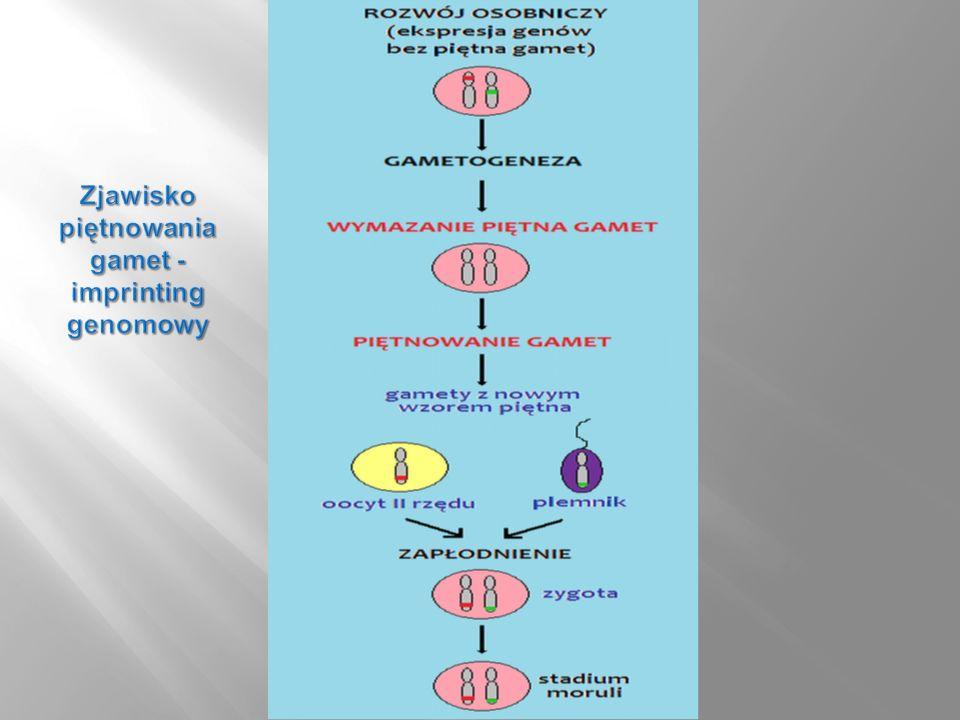 Zjawisko piętnowania gamet - imprinting genomowy