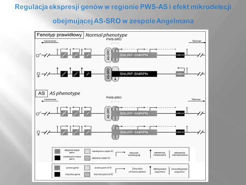 Regulacja ekspresji genów w regionie PWS-AS i efekt mikrodelecji obejmującej AS-SRO w zespole Angelmana