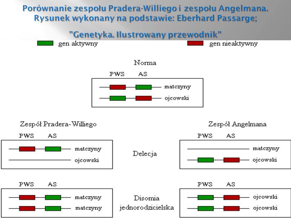 Porównanie zespołu Pradera-Williego i zespołu Angelmana