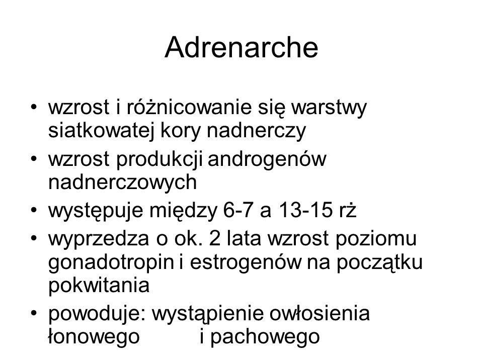 Adrenarche wzrost i różnicowanie się warstwy siatkowatej kory nadnerczy. wzrost produkcji androgenów nadnerczowych.