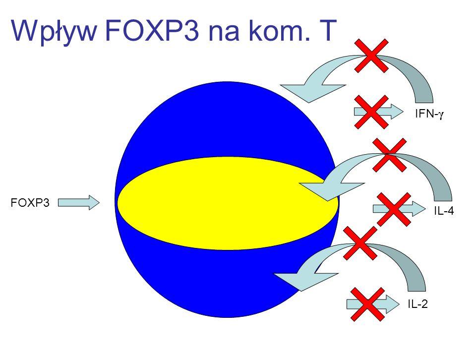 Wpływ FOXP3 na kom. T IFN-γ FOXP3 IL-4 IL-2