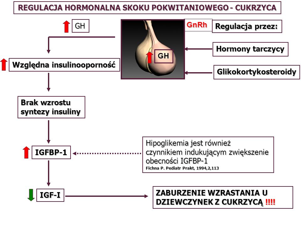 REGULACJA HORMONALNA SKOKU POKWITANIOWEGO - CUKRZYCA