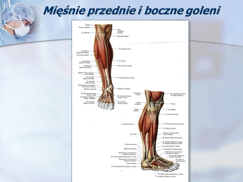 Mięśnie przednie i boczne goleni