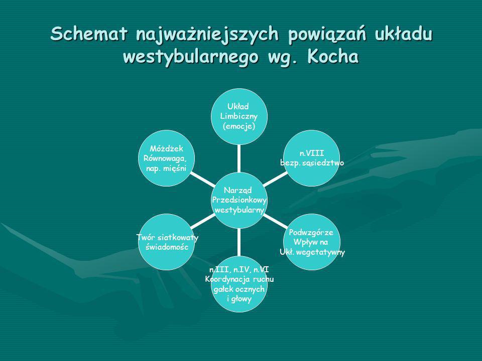Schemat najważniejszych powiązań układu westybularnego wg. Kocha