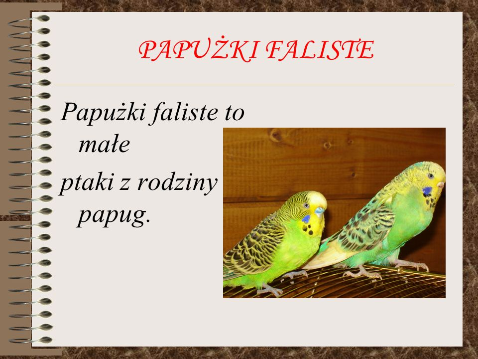 PAPUŻKI FALISTE Papużki faliste to małe ptaki z rodziny papug.