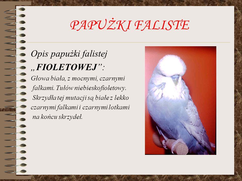 "PAPUŻKI FALISTE Opis papużki falistej ""FIOLETOWEJ :"