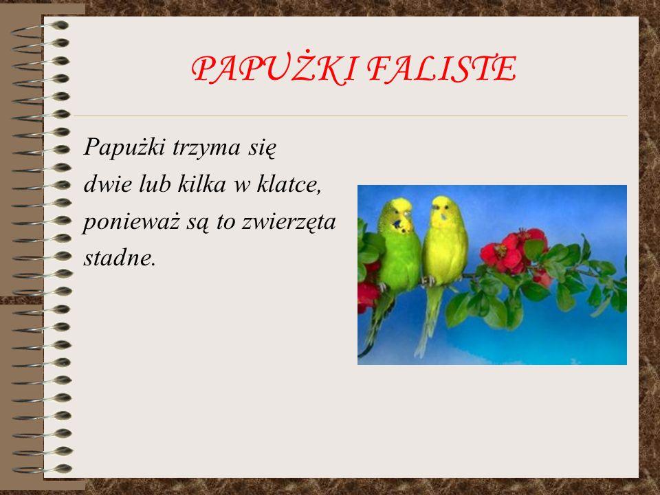PAPUŻKI FALISTE Papużki trzyma się dwie lub kilka w klatce,