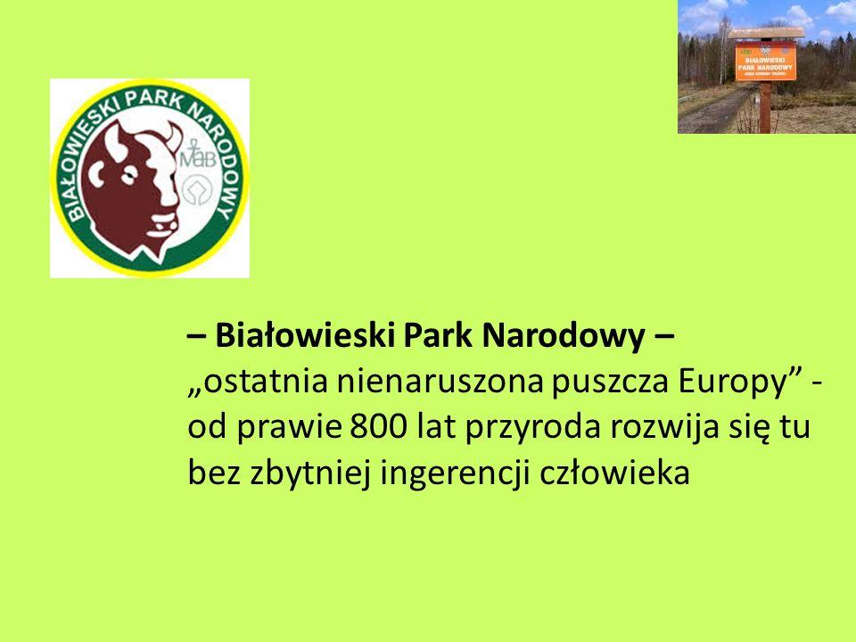 """– Białowieski Park Narodowy – """"ostatnia nienaruszona puszcza Europy - od prawie 800 lat przyroda rozwija się tu bez zbytniej ingerencji człowieka"""