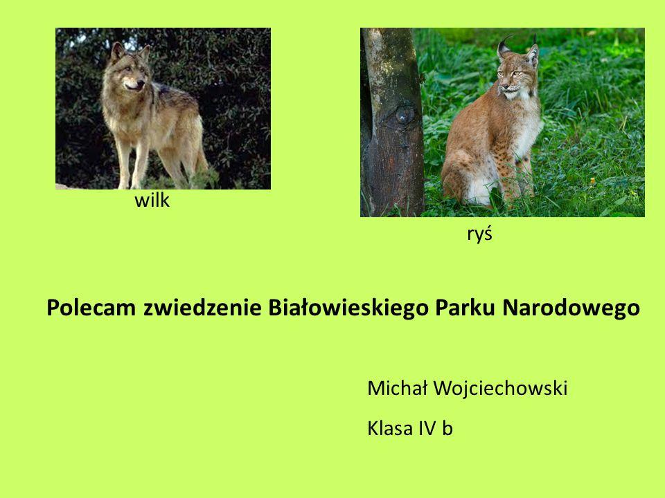 Polecam zwiedzenie Białowieskiego Parku Narodowego