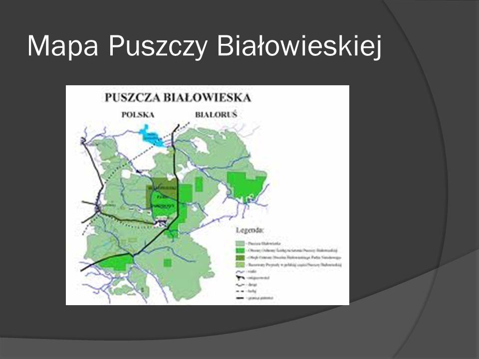 Mapa Puszczy Białowieskiej
