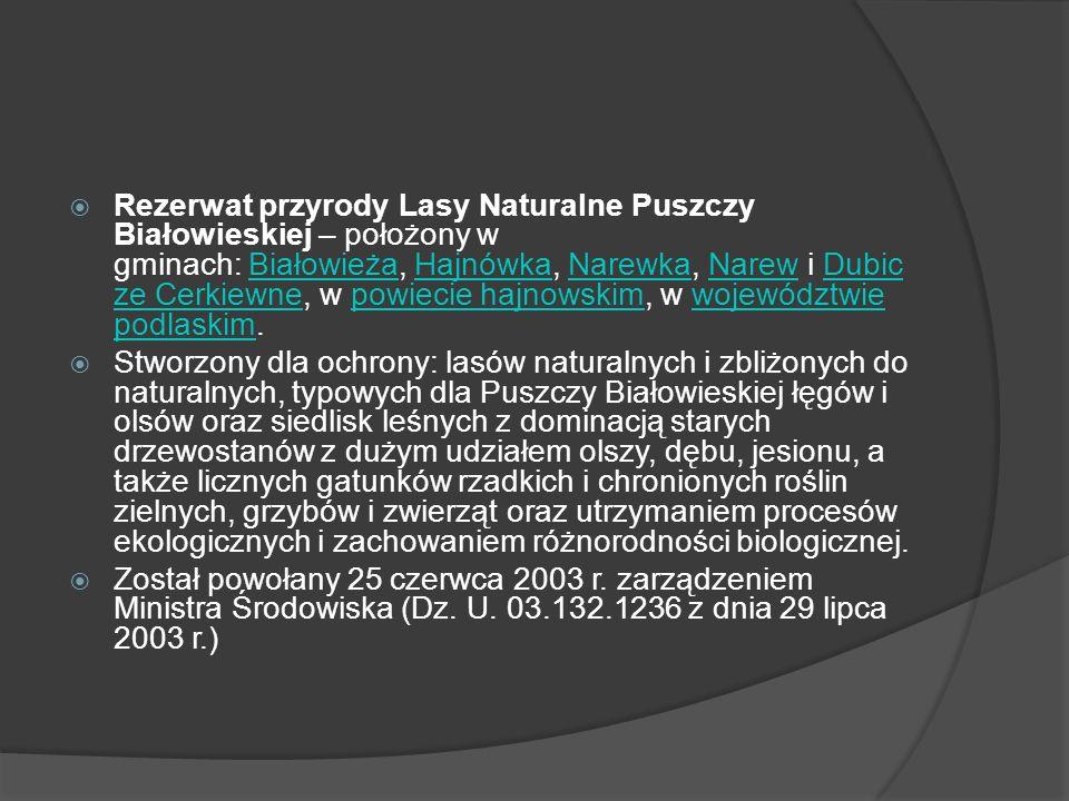 Rezerwat przyrody Lasy Naturalne Puszczy Białowieskiej – położony w gminach: Białowieża, Hajnówka, Narewka, Narew i Dubicze Cerkiewne, w powiecie hajnowskim, w województwie podlaskim.