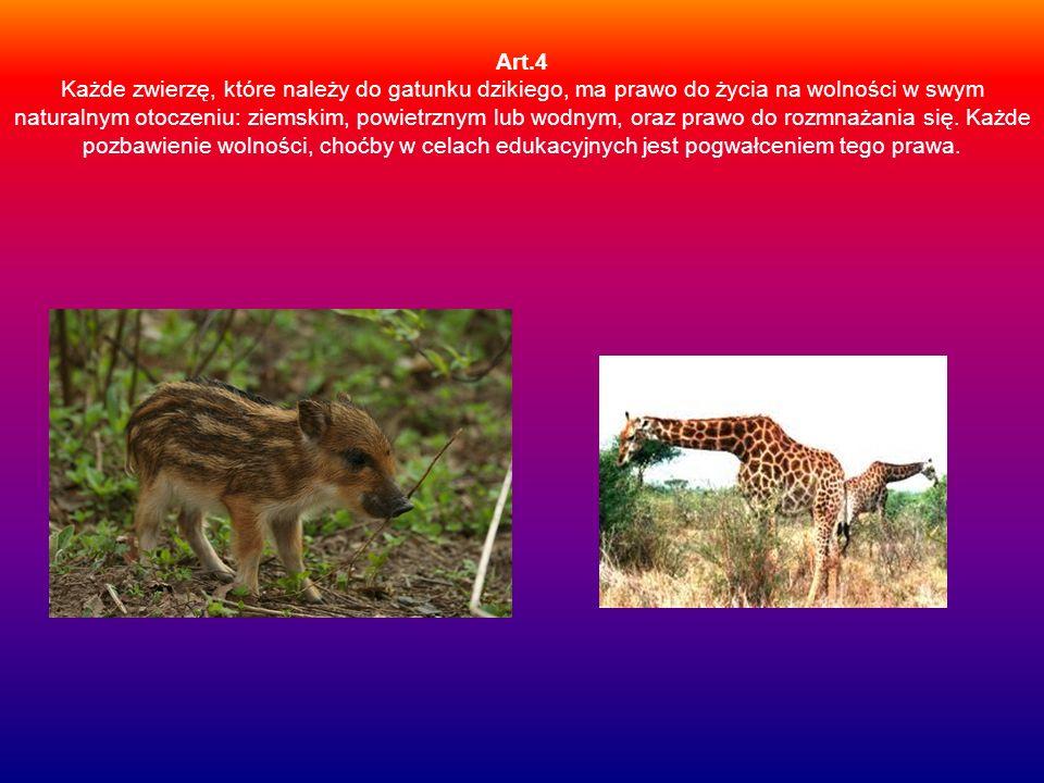 Art.4 Każde zwierzę, które należy do gatunku dzikiego, ma prawo do życia na wolności w swym naturalnym otoczeniu: ziemskim, powietrznym lub wodnym, oraz prawo do rozmnażania się.