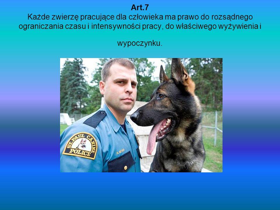 Art.7 Każde zwierzę pracujące dla człowieka ma prawo do rozsądnego ograniczania czasu i intensywności pracy, do właściwego wyżywienia i wypoczynku.