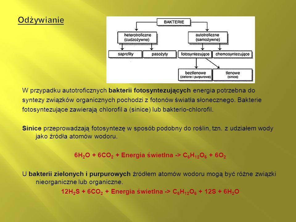 Odżywianie W przypadku autotroficznych bakterii fotosyntezujących energia potrzebna do.