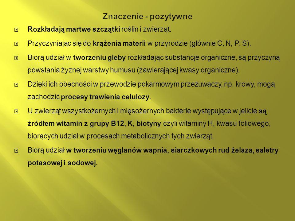Znaczenie - pozytywne Rozkładają martwe szczątki roślin i zwierząt.