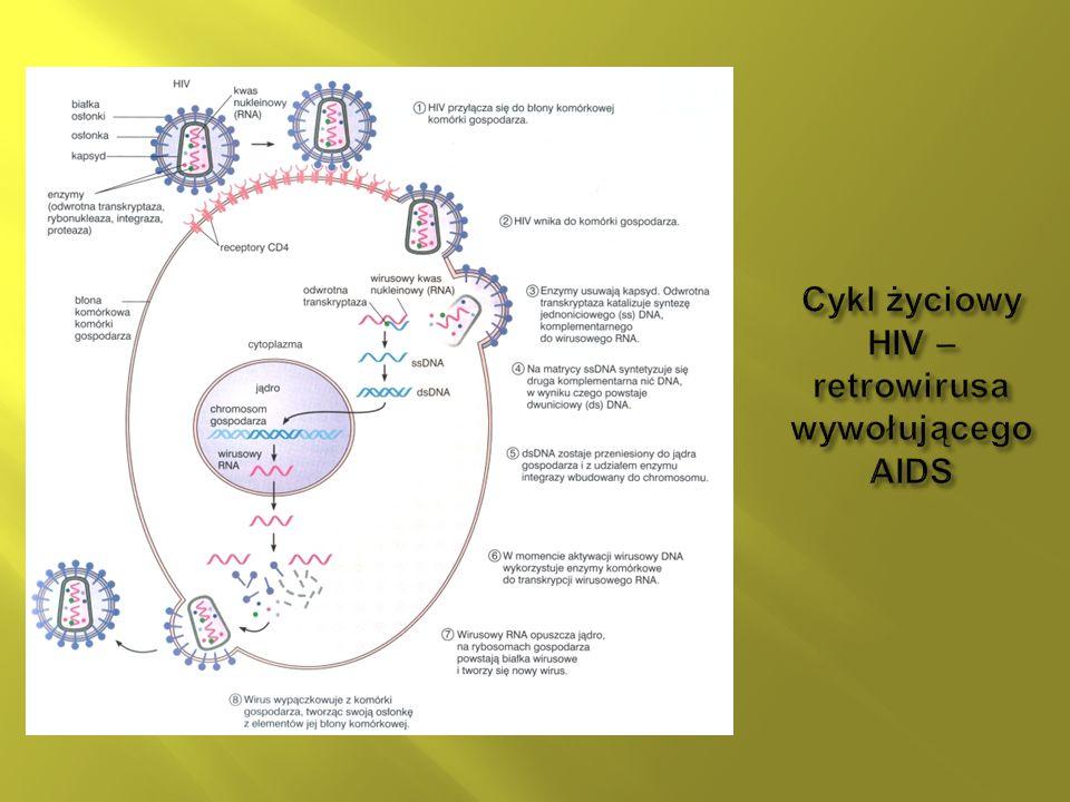 Cykl życiowy HIV – retrowirusa wywołującego AIDS