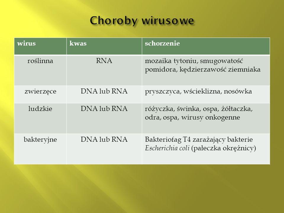 Choroby wirusowe wirus kwas schorzenie roślinna RNA