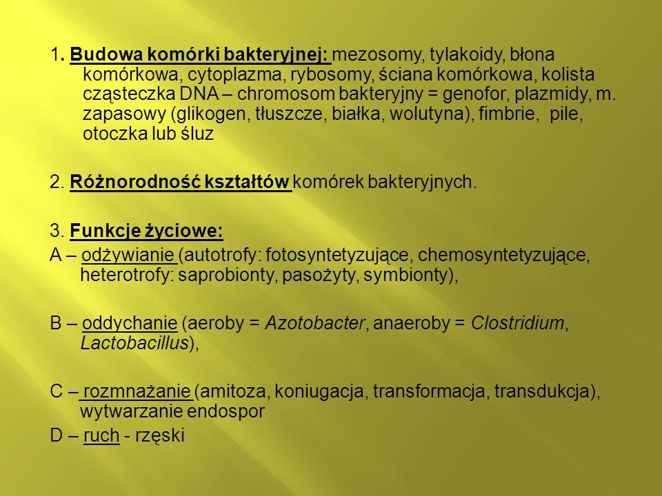 1. Budowa komórki bakteryjnej: mezosomy, tylakoidy, błona komórkowa, cytoplazma, rybosomy, ściana komórkowa, kolista cząsteczka DNA – chromosom bakteryjny = genofor, plazmidy, m. zapasowy (glikogen, tłuszcze, białka, wolutyna), fimbrie, pile, otoczka lub śluz