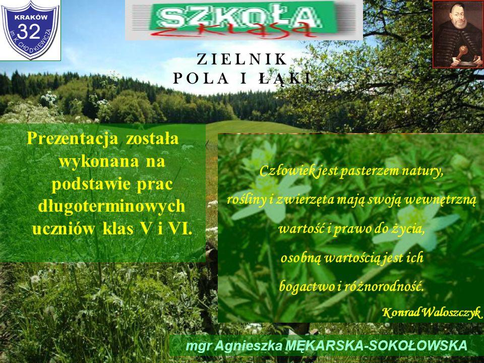 Z I E L N I K P O L A I Ł Ą K IPrezentacja została wykonana na podstawie prac długoterminowych uczniów klas V i VI.