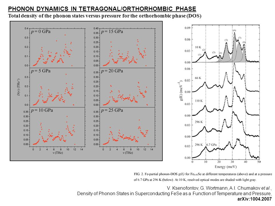 PHONON DYNAMICS IN TETRAGONAL/ORTHORHOMBIC PHASE