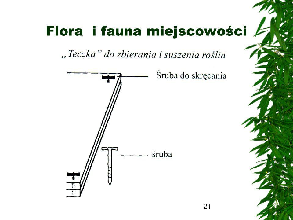 Flora i fauna miejscowości