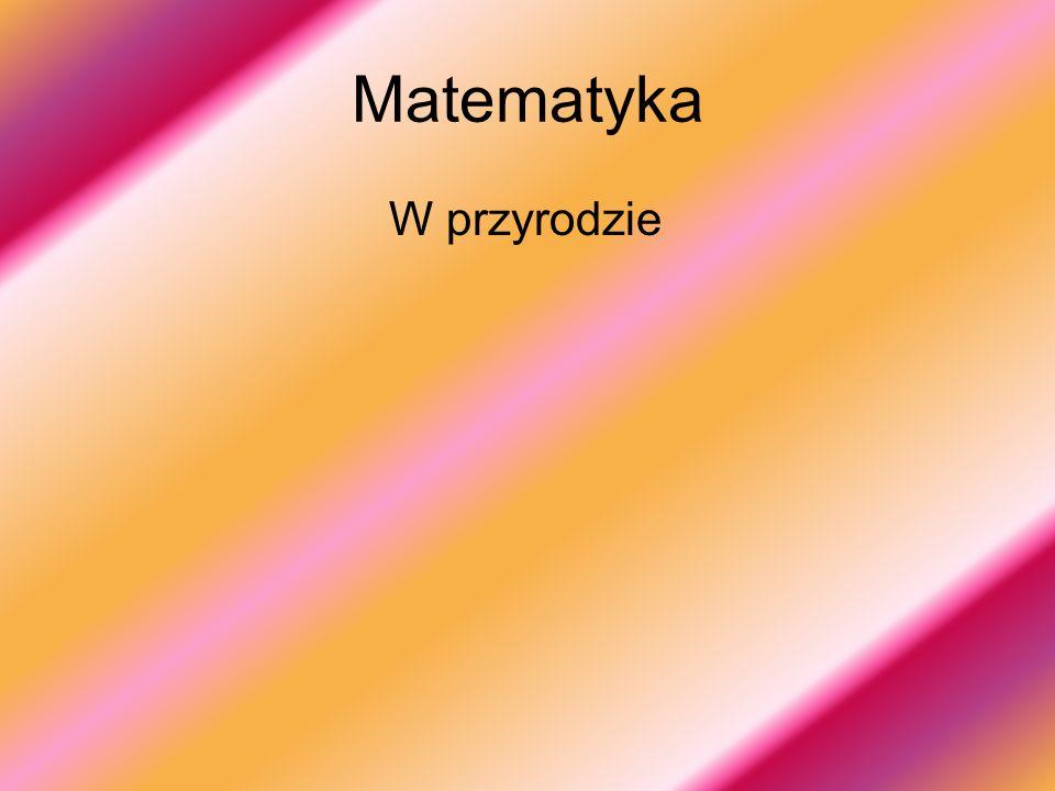 Matematyka W przyrodzie