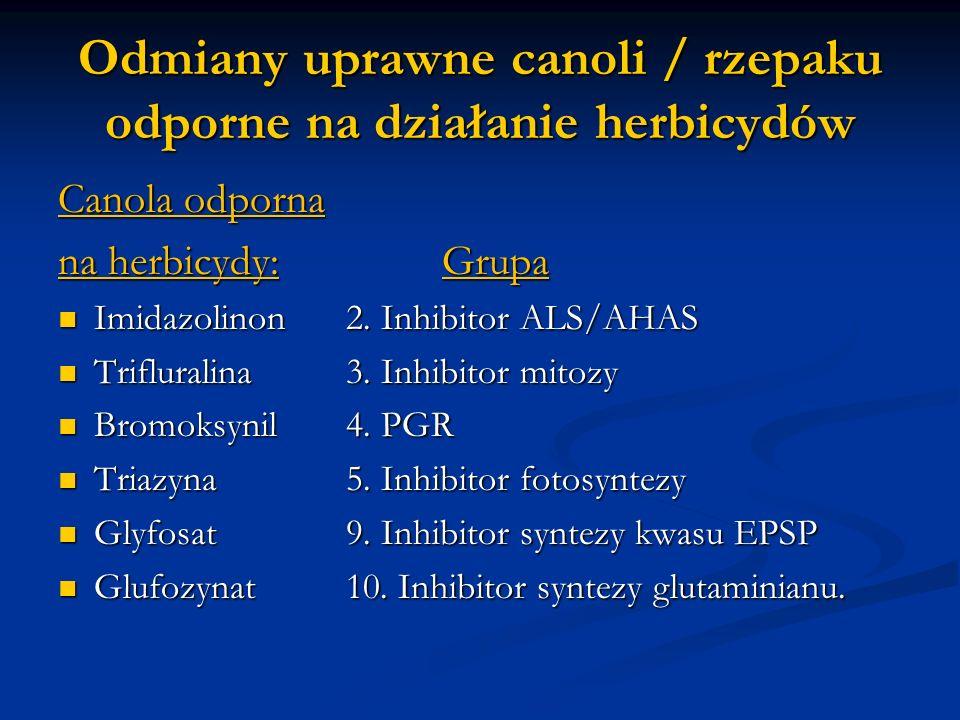 Odmiany uprawne canoli / rzepaku odporne na działanie herbicydów