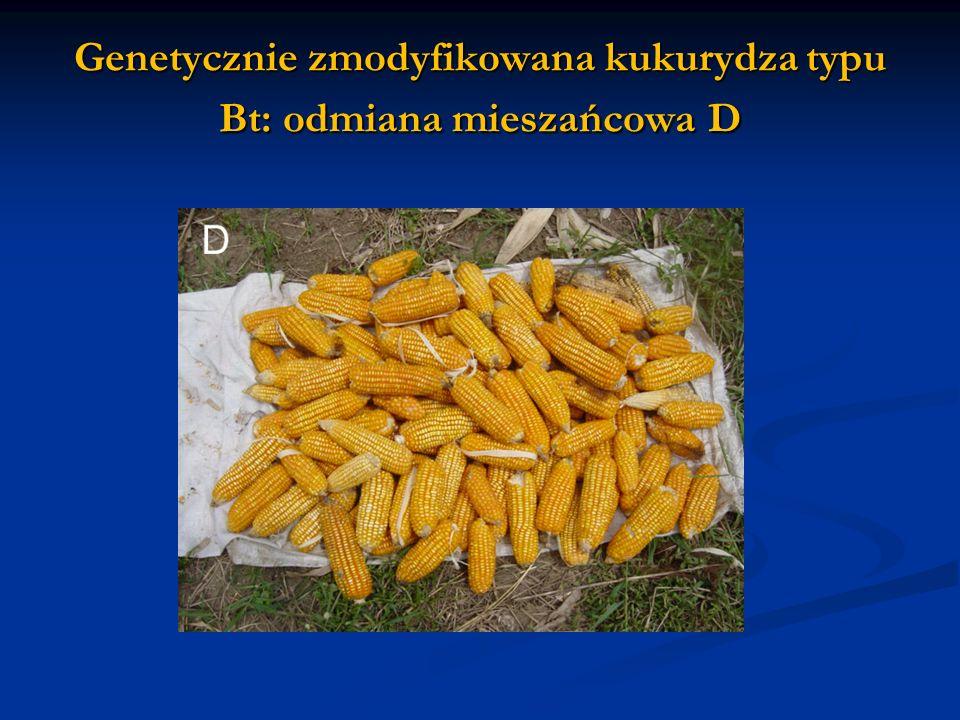 Genetycznie zmodyfikowana kukurydza typu Bt: odmiana mieszańcowa D