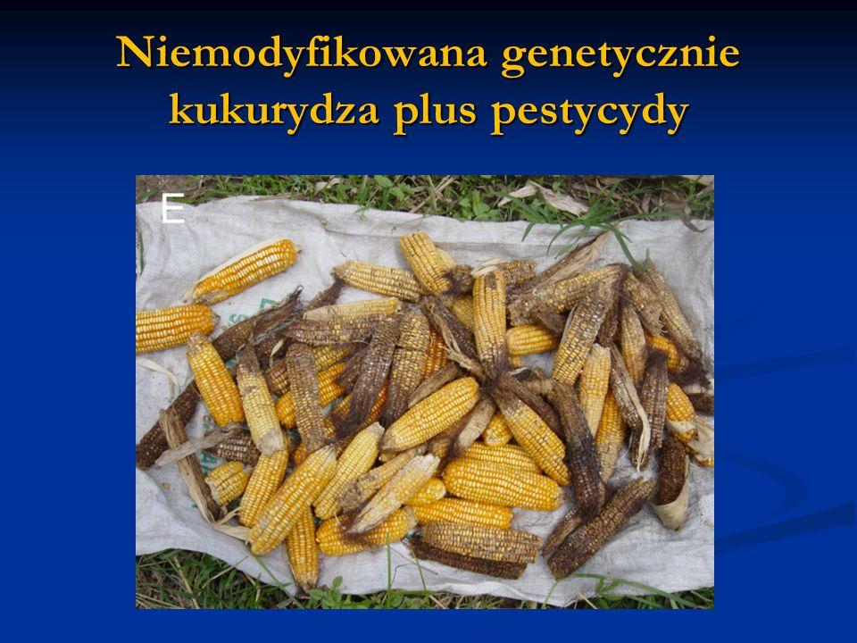 Niemodyfikowana genetycznie kukurydza plus pestycydy